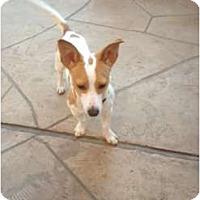 Adopt A Pet :: Finley in Houston - Houston, TX