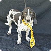 Adopt A Pet :: Max - Plano, TX