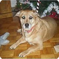 Adopt A Pet :: Daisy - Rigaud, QC
