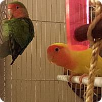Adopt A Pet :: Sissy & Unnamed - Lexington, GA