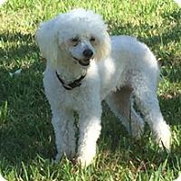 Adopt A Pet :: GINNY - Melbourne, FL