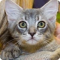 Adopt A Pet :: Coby - Irvine, CA