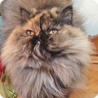 Adopt A Pet :: Jasmine - Davis, CA