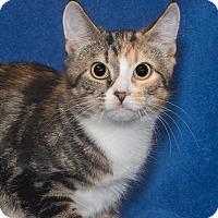 Adopt A Pet :: Callie - Elmwood Park, NJ