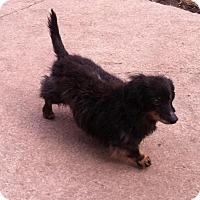 Adopt A Pet :: Pepe - Lincoln, NE