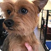 Adopt A Pet :: Pollyanna - Barnesville, GA