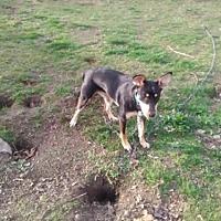 Adopt A Pet :: Rosebud and Bear/CP - Columbia, TN
