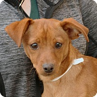 Adopt A Pet :: Peter - Palmdale, CA