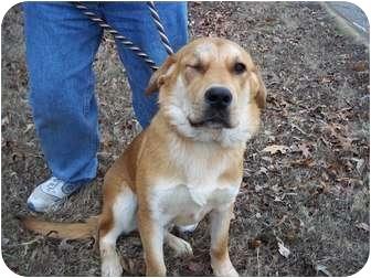 Shepherd (Unknown Type)/Labrador Retriever Mix Dog for adoption in Adamsville, Tennessee - Rocky