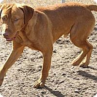 Adopt A Pet :: Houdini - Sylvania, GA