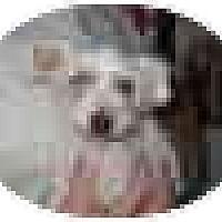 Adopt A Pet :: Ginny - Albany, NY