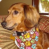 Adopt A Pet :: Hennessey - San Jose, CA