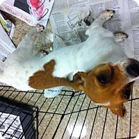 Adopt A Pet :: Rod - Fresno, CA