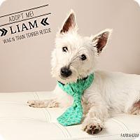 Adopt A Pet :: Liam-Pending Adoption - Omaha, NE
