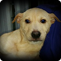 Adopt A Pet :: Dale - Brattleboro, VT