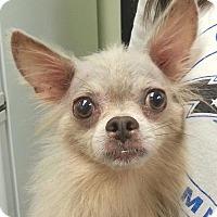 Adopt A Pet :: Stevie - geneva, FL
