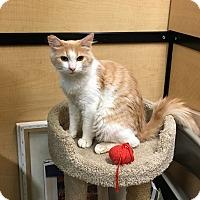 Adopt A Pet :: Simpson - Riverside, CA