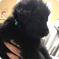 Adopt A Pet :: Turquoise Boy - Zanesville, OH