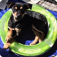 Adopt A Pet :: Dot - Von Ormy, TX