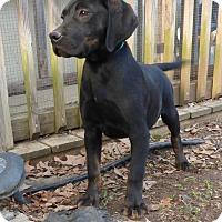 Adopt A Pet :: Bingo - Bedminster, NJ