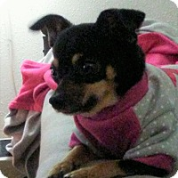 Adopt A Pet :: Emma - Philadelphia, PA