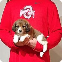 Adopt A Pet :: Jaxson - South Euclid, OH