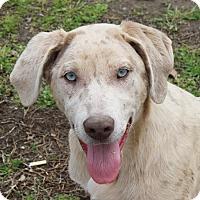 Adopt A Pet :: Sadie - kennebunkport, ME