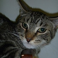 Adopt A Pet :: Fillmore - Hamburg, NY