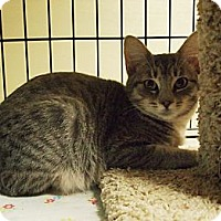 Adopt A Pet :: Fedora - Ocean City, NJ