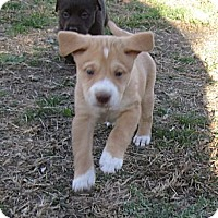 Adopt A Pet :: Aurora - Copperas Cove, TX