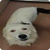 Adopt A Pet :: LARISSA - Ogden, UT