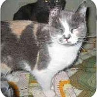 Adopt A Pet :: Tippy - Strathmore, AB