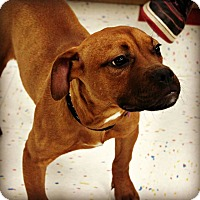 Adopt A Pet :: Alice - East Rockaway, NY