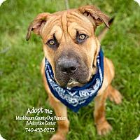 Adopt A Pet :: Hooch - ADOPTED! - Zanesville, OH