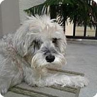 Adopt A Pet :: Sunday - Ft. Lauderdale, FL