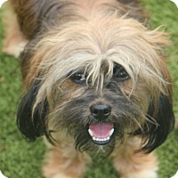 Adopt A Pet :: Guido - MEET ME - Norwalk, CT