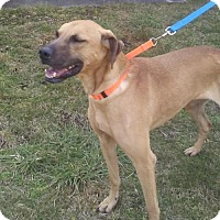Adopt A Pet :: Emilee - Akron, OH