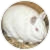 Adopt A Pet :: Ella - Quilcene, WA