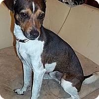 Adopt A Pet :: Rider - Plainfield, CT