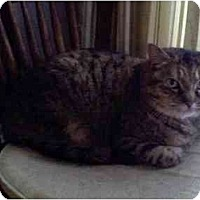 Adopt A Pet :: Sadie - Portland, ME