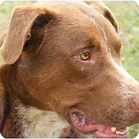 Adopt A Pet :: Spencer - Gonzales, TX