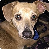 Adopt A Pet :: Thunder - Orlando, FL