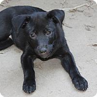 Adopt A Pet :: Betsy - Marion, AR