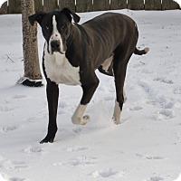 Adopt A Pet :: Toby - St. Louis, MO