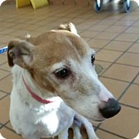 Adopt A Pet :: Milo - Wisconsin Dells, WI