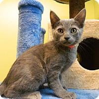 Adopt A Pet :: Peggy - The Colony, TX