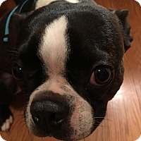 Adopt A Pet :: Bean - Jackson, TN
