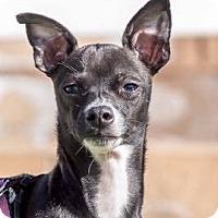 Adopt A Pet :: Nick - San Diego, CA