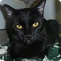 Adopt A Pet :: Sheamus - Hamburg, NY