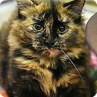 Adopt A Pet :: Adilyn - Aiken, SC